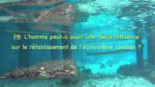 Ecosystème coralien