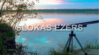 Фидерная рыбалка на диком озере под пение птиц Линь Краснопёрка TENCH FISHING Līņi Rudd cope