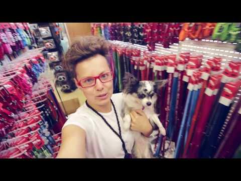 Покупки в зоомагазине для собаки, ошейники, адресники | Догмама Влог