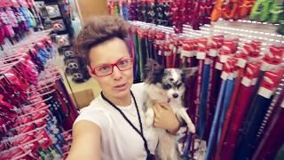Покупки в зоомагазине для собаки, ошейники, адресники | Догмама Влог(, 2016-07-23T07:46:34.000Z)