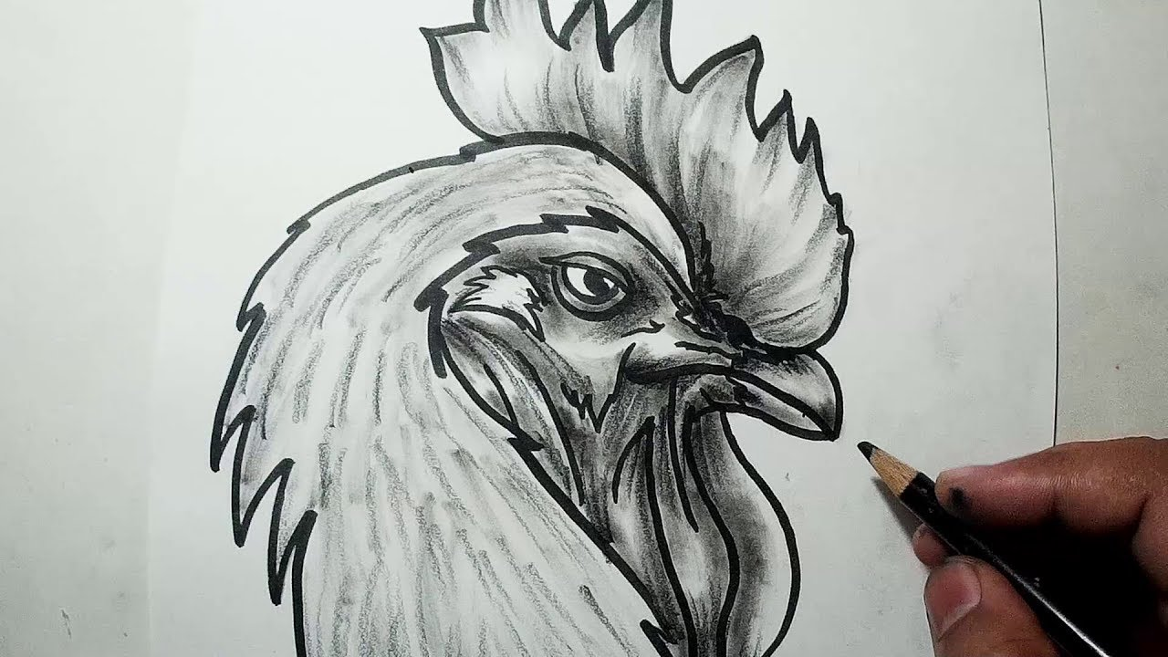 This is an image of Fan Rooster Drawing Easy