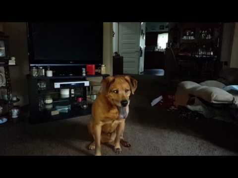 Dog catching ball slow motion