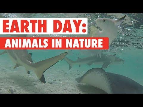 Animals Enjoying Nature Compilation | Earth Day 2018
