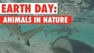 Animals Enjoying Nature Compilation | Earth Day 2018