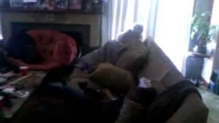 Dog on catnip