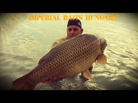 Imperial Baits Hungary - with Istvan Szabo Pipsi