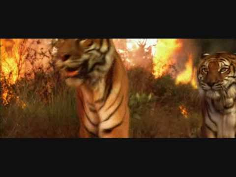 two brothers a tiger movie part 10 youtube