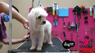 Dog Groomers Dont Do Their Job