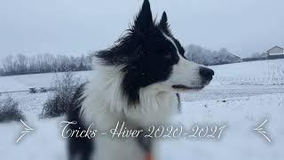 Dog Tricks by Bimka Border Collie [Winter 20202021]