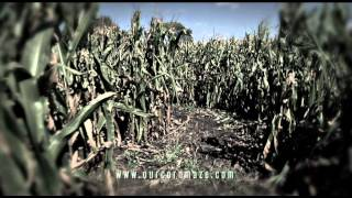 Zombie Corn Maze at Siegel's Cottonwood Farms, Chicago Illinois Best Fall Festival.
