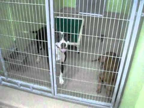 Orange County Animal Shelter in Orlando,FL