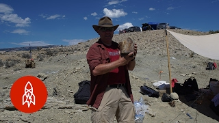 New Tools, Old Bones: Bringing Fossils to Life Through Technology