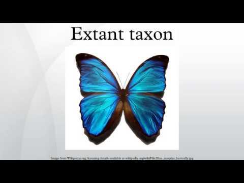 Extant taxon