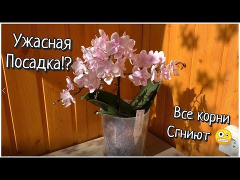 Орхидеи /Что стало с орхидеей после пересадки / Отвечаю на вопросы