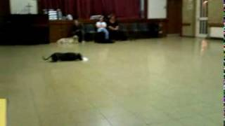 Dog Training Dukinfield, Cheshire; Dawes Paws