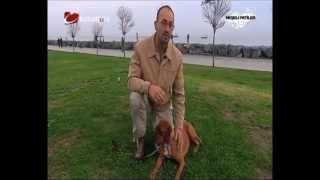 Boxerlar - Ev Köpekleri Eğitimi