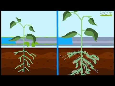 Aqua-4D Water Solutions, le fonctionnement du système!
