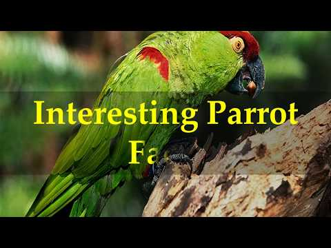 Interesting Parrot Facts