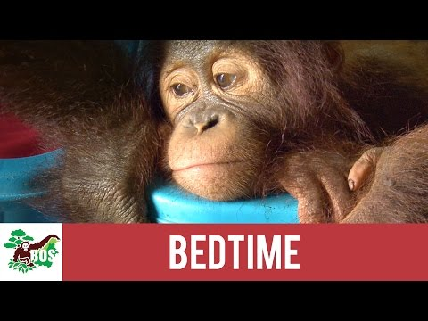Bedtime   BOS Foundation