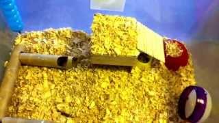 2013 como aser tubos y casita para hamster