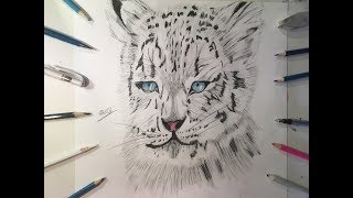 Drawing of a Snow Leopard (VERY EASY)- ZArtwork