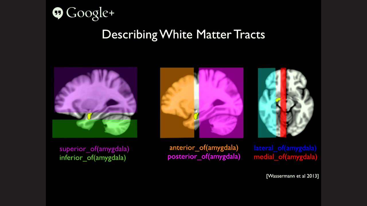 On Describing White Matter Anatomy - Dr Wassermann - FNNDSC Talk ...