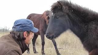 Olha a reação do cavalo ao ver homem que o salvou