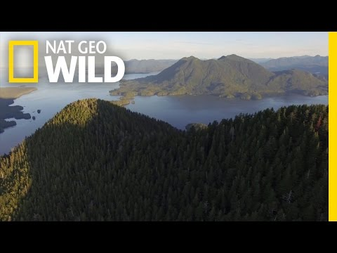 Vancouver Island: Trees and Trails, Surfing and Sushi   wild_life with bertie gregory