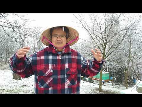 🇨🇿 Bí Quyết Để Đàn Ong Sống Qua Mùa Đông (Kỹ thuật nuôi ong ở Séc)