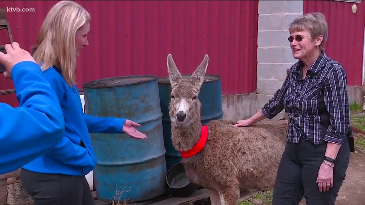 Bambi lives at Idaho ranch for 18 years