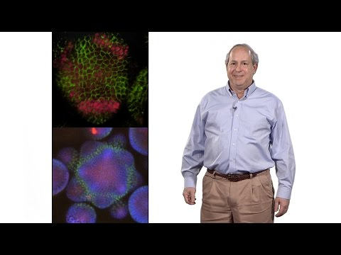Elliot Meyerowitz (Caltech , HHMI) 1: Why we need to understand plant development