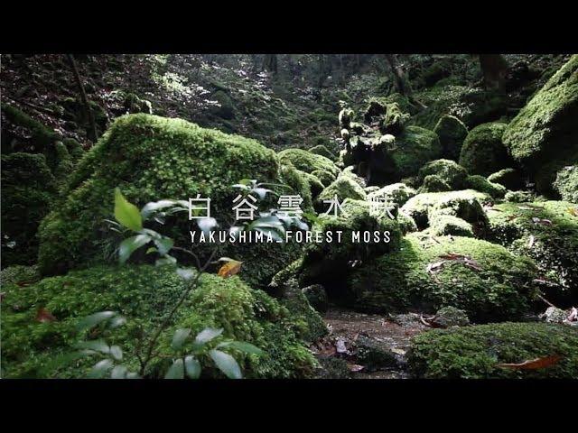 白谷雲水峡[屋久島]