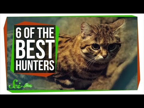 6 Of The Planet's Best Hunters