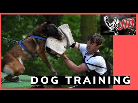 How To Train A Dog To Bite A Training Sleeve With Viorel Scinteie !!!