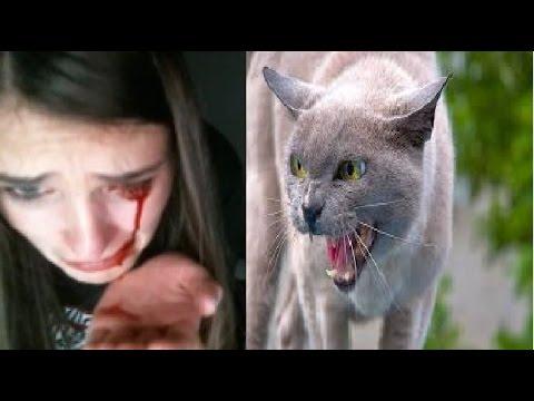 Le 10 Razze Di Felini Piu Pericolose Al Mondo Youtube