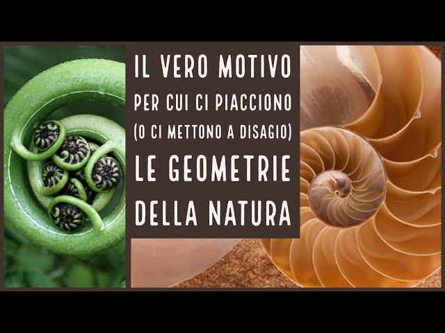 Il vero motivo per cui ci piacciono le geometrie della natura