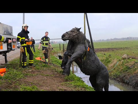 15 rührende Momente, in denen Tiere Menschen um Hilfe baten