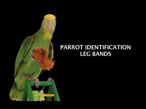 Parrot Identification - Leg Bands