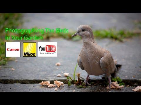 Garden Bird Photography
