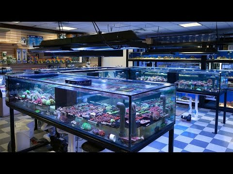 Store Tour and Brief History of Vivid Aquariums