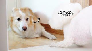 자신을 싫어하는 강아지를 만난 브로콜리의 귀여운 반응 ㅋㅋㅋㅋ