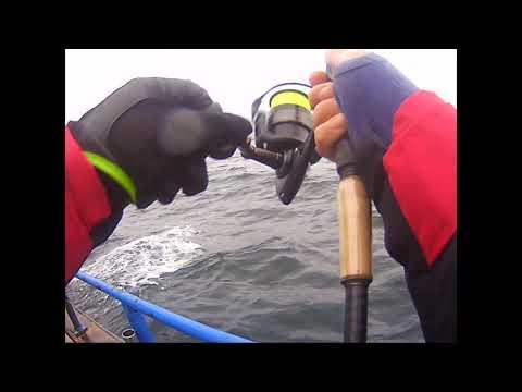 Torskefiske Öresund