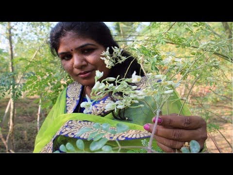 moringa-flower-fry-|-nature-solution-to-oligospermia-|-healthy-village-food