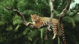 Amazon rainforest animals - Discover the animals in the Amazon Forest