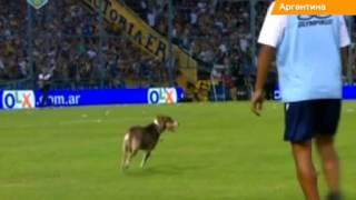 Футбольный матч в Аргентине прервала собака. Животное справило нужду прямо в воротах