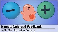 Homeostasis and Negative/Positive Feedback