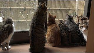 鳥に夢中になってシンクロする猫たち