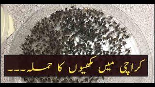 Flies Attack In Karachi