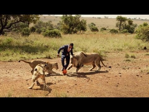 Incredible Playing Soccer With Lions