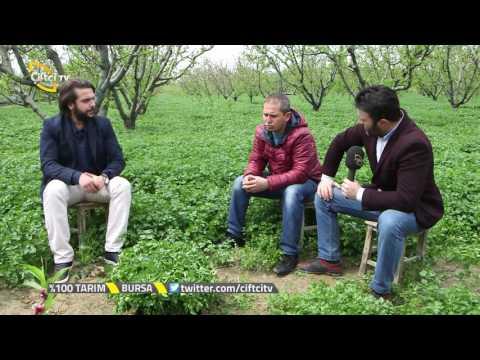 %100 Tarım -  Maydonoz Yetiştiriciliği Nasıl Yapılır? / Bursa